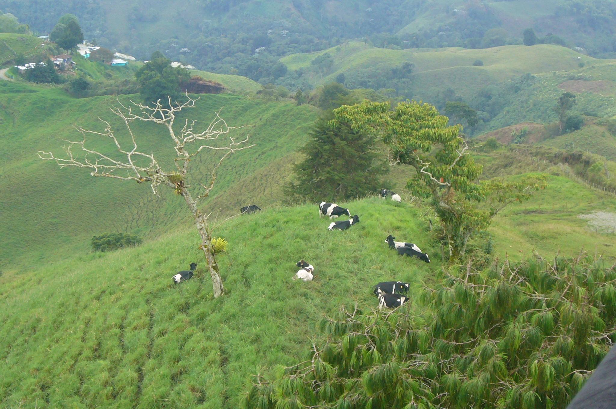 Colombia Coffee Region Coffee Growing Region Armenia